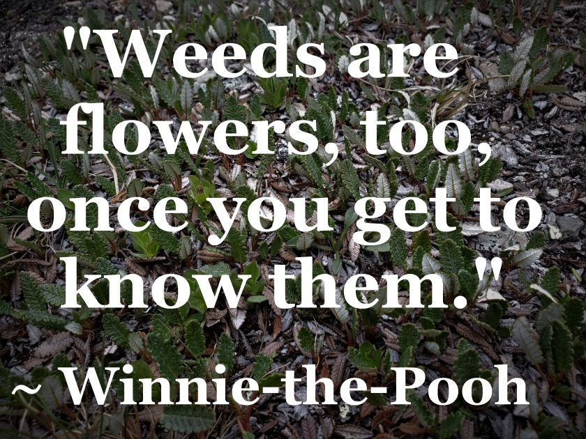Winnie-the-Pooh - weeds are flowers too